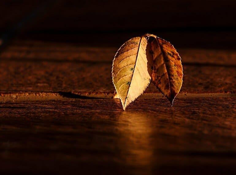 秋の落ち葉オレンジ