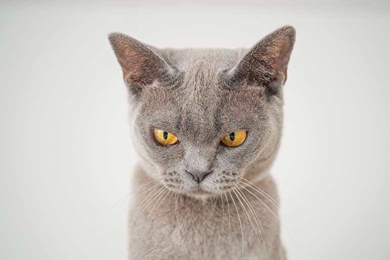 愛想悪い猫