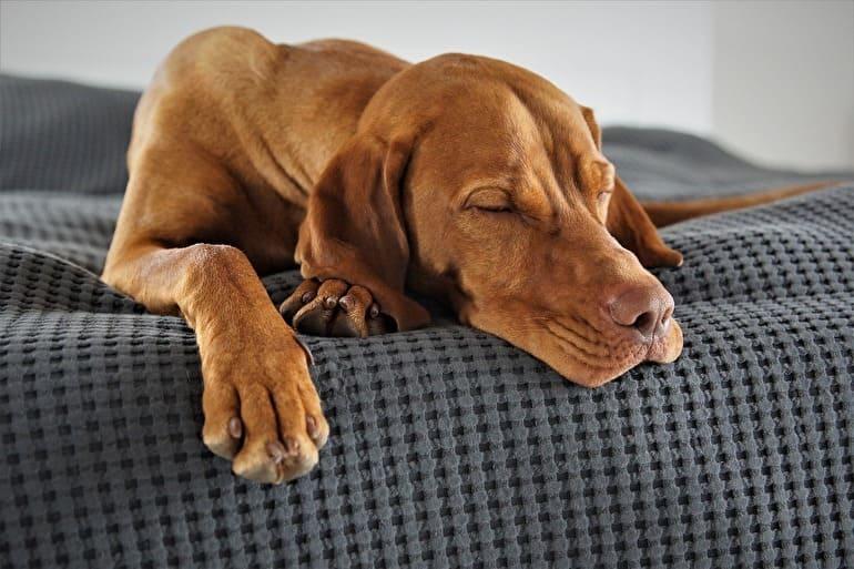 のんびりくつろいでいる犬