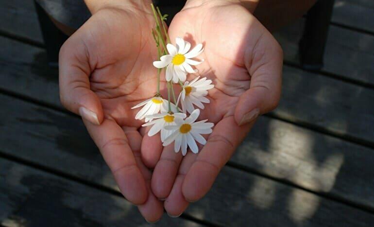 小さな白いお花を差し出す手